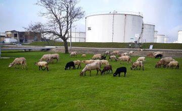 De lente begint: 250 'seizoenmedewerkers' weer in het veld