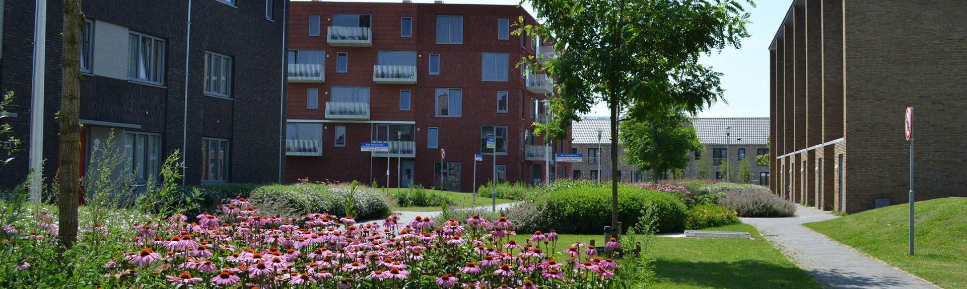 TenG_Groene Vingers Vredesplein Eindhoven (4)