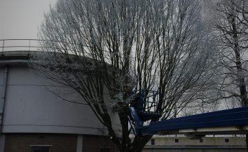 De nieuwe Wet natuurbescherming en het onderhoud van bomen