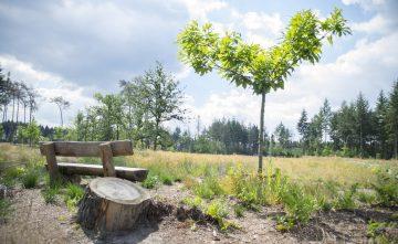Natuurbegraafplaats Schoorsveld