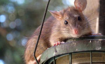 Duurzame plaagdierenbestrijding
